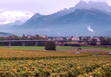 Vigne svizzere con le montagne Fotografie Stock Libere da Diritti