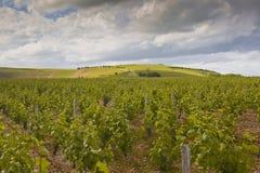 Vigne tempestose della Loira Immagini Stock