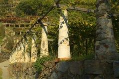 Vigne tipiche Canavesani fotografia stock