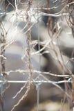 Vigne tortillée enroulée autour de la barrière en métal Images libres de droits