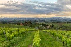 Vigne in Toscana al crepuscolo, l'Italia Immagine Stock