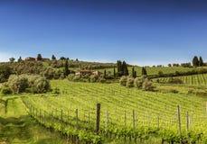 Vigne in Toscana un giorno di estate soleggiato, fotografia stock