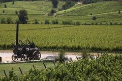 Vigne - valle di Colchagua - il Cile Immagini Stock