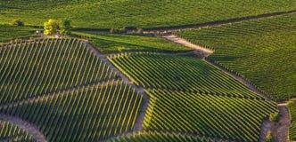 Vigne verdi sulle colline in Italia Fotografia Stock Libera da Diritti