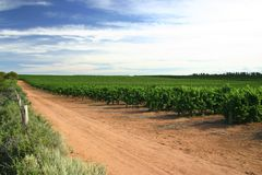 Vigne victorienne Images stock