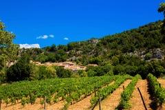 Vigne, villaggio e montagne Immagine Stock