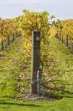Vignes 05 d'automne Photographie stock