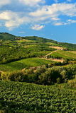 Vignes. Image libre de droits