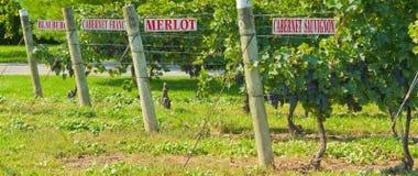 Vignes avec des signes photographie stock libre de droits