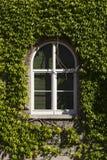 Vignes blanches 1 de cadre de fenêtre image libre de droits