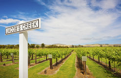 Vignes chez Jacobs Creek Winery Photo stock