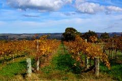 Vignes colorées, McLaren Vale Image stock