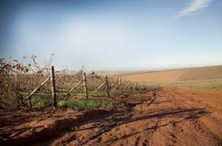 Vignes d'automne images stock