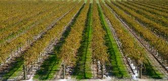Vignes d'automne aucune route Photographie stock libre de droits