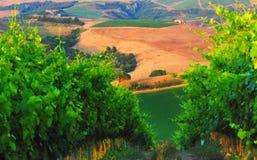 Vignes dans Chianti photographie stock