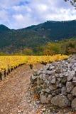 Vignes dans vignes Photographie stock