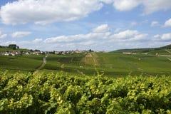 Vignes de champagne photos libres de droits