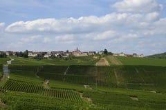 Vignes de champagne photographie stock libre de droits