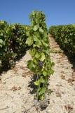 Vignes de champagne images stock