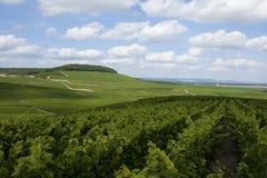 Vignes de champagne Photo stock