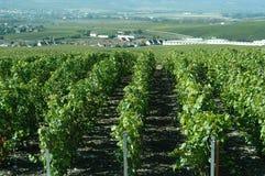 Vignes de Champagne Photo libre de droits