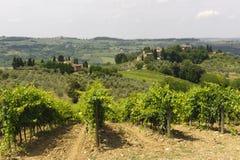 Vignes de Chianti (Toscane) photographie stock libre de droits