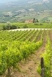 Vignes de Chianti (Toscane) images libres de droits