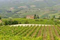 Vignes de Chianti (Toscane) photos libres de droits