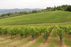 Vignes de Chianti (Toscane) image stock