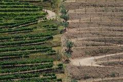 Vignes de Douro Photo libre de droits