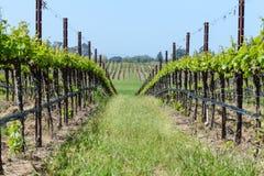 Vignes de Napa Valley Photo libre de droits