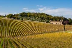 Vignes de région de vin de Chianti, Toscane images libres de droits