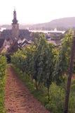 Vignes de Rudesheim photographie stock libre de droits