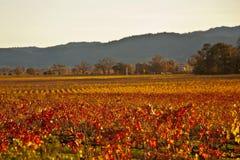 Vignes de vallée d'arc-en-ciel Image stock
