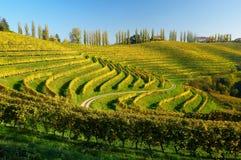 Vignes en automne Image libre de droits