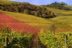 Vignes en automne images stock