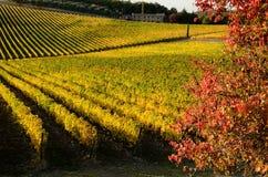Vignes en automne photo libre de droits