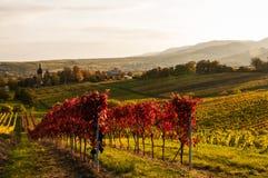 Vignes en automne Photos libres de droits