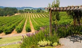 Vignes en Californie Photographie stock libre de droits