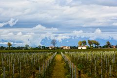 Vignes en Italie Un léger effet de mouvement images libres de droits