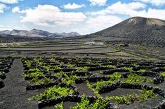 Vignes en La Geria, Lanzarote, Espagne. Photos libres de droits