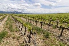 Vignes en Provence Images stock