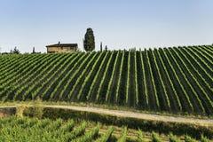 Vignes en Toscane photo libre de droits