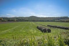 Vignes en Toscane Image stock