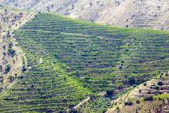 Vignes en vallée de Douro Image libre de droits