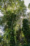 Vignes et arbres photo libre de droits