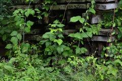 Vignes et bois Photos stock