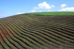 Vignes et ciel Images libres de droits