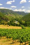 Vignes, gorges du le Tarn, France Images libres de droits