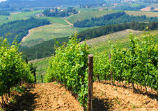 Vignes italiennes photos stock